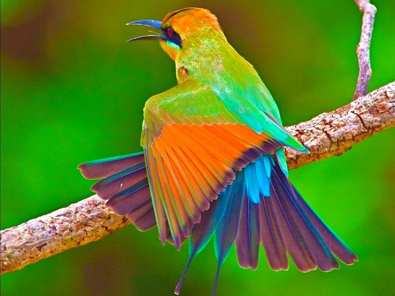 Pourquoi les Beaux Oiseaux ne Chantent pas ? | Babilown-Mawole: babilown.com/2013/12/07/pourquoi-les-beaux-oiseaux-ne-chantent-pas
